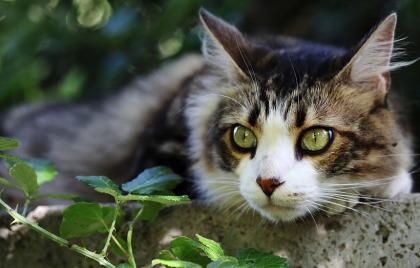 Services Animaliers Rive Sud tient une promotion pour adopter des chats.