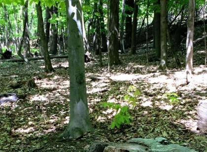 Le parc Michel-Chartrand a fait l'objet d'ajout de systèmes de géolocalisation comme premières actions structurantes du plan de sécurité.